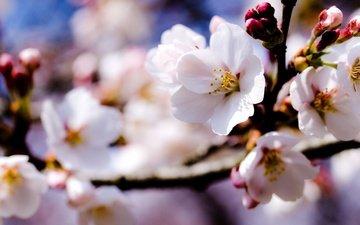flowers, branch, flowering, spring