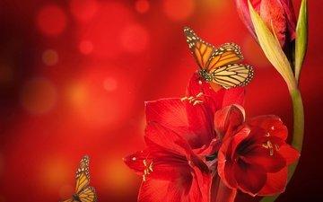 цветок, насекомые, рендеринг, бабочки, боке, амариллис