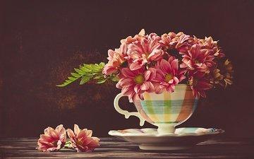 цветы, блюдце, чашка, хризантемы