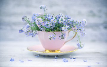 цветы, блюдце, чашка, незабудки, букетик, натюрморт
