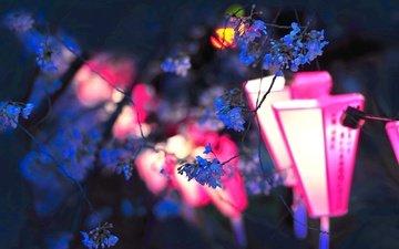 цветы, фонари, вечер, цветение, ветки, япония, весна, сакура