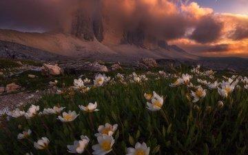 свет, цветы, облака, горы, природа, весна, альпы