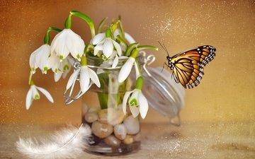 цветы, камни, насекомое, бабочка, коллаж, перо, банка, подснежники