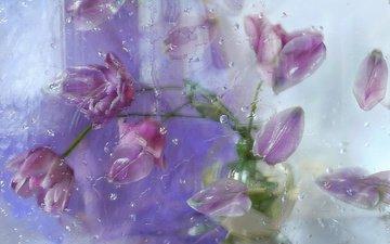 цветы, капли, лепестки, тюльпаны, стекло, композиция