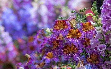 цветы, макро, дигиталис, наперстянка, сальпиглосис