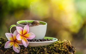 цветы, макро, зерна, кофе, мох, чашка, улитка, плюмерия, франжипани