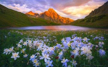цветы, озеро, горы, природа, пейзаж
