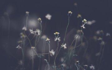 цветы, природа, фон, полевые цветы