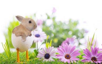 цветы, трава, природа, весна, ножки, кролик, пасха, праздник, скорлупа