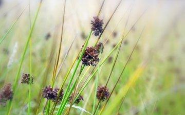 цветы, трава, зелень, растения, семена