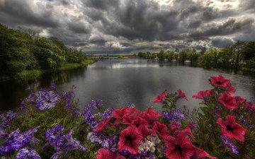 цветы, деревья, река, берег, закат, тучи, пейзаж