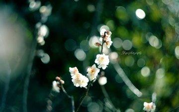 flowers, branch, flowering, blur, spring, sakura, yayoi