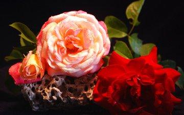 цветы, вода, макро, капли, розы, лепестки, букет