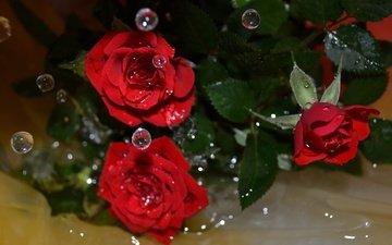 цветы, вода, макро, капли, розы