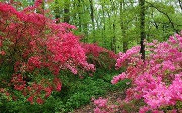деревья, цветение, лес, швейцария, тропинка, весна