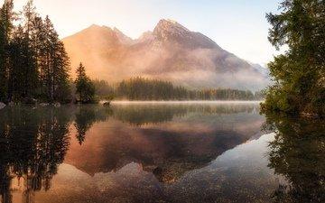 деревья, озеро, горы, утро, туман, гладь, водная