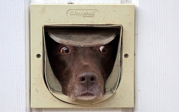 глаза, морда, взгляд, дверь, собака, друг, собака.