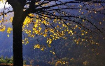 горы, дерево, лес, листья, ветви, осень, желтые