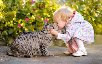 кот, кусты, листва, девочка, ребенок, животное, нежность, малышка