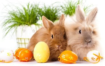 animals, look, ears, rabbits, easter, eggs, faces