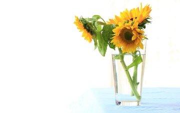цветы, лепестки, подсолнух, букет, стакан