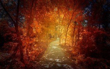 деревья, лес, листья, дорожка, осень
