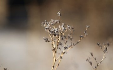nature, plants, macro, background, spring, dry grass
