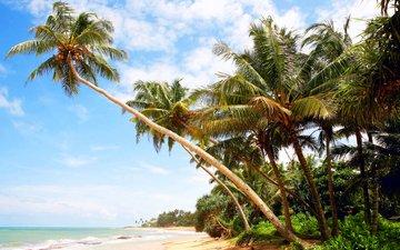 море, пляж, пальмы, отдых, остров, мальдивы