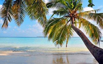 море, пляж, пальмы, отдых, остров, тропики