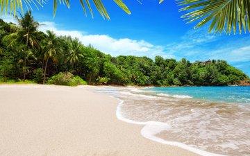 море, пляж, пальмы, отдых, тропики