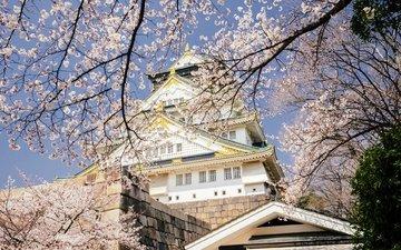 небо, цветение, япония, весна, дворец, осака