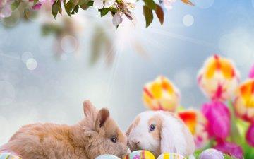 небо, цветы, ветка, природа, лучи, животные, весна, тюльпаны, кролики, пасха, яйца, праздник, боке