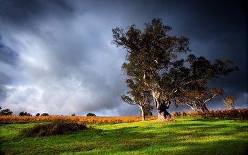 небо, облака, деревья, природа, вид, гроза, зелёная трава