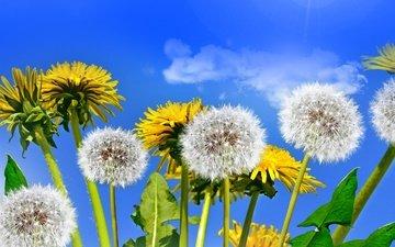 небо, цветы, солнце, поле, весна, одуванчики