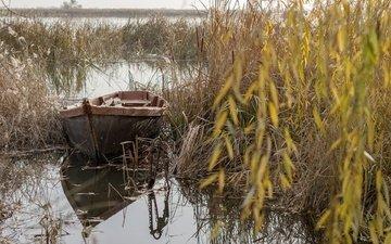 озеро, природа, отражение, фон, лодка, камыш, у берега, марина соколова