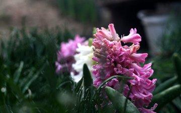 природа, макро, фон, цветок, капли, боке