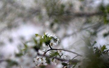 nature, flowering, macro, background, flower, spring, bokeh