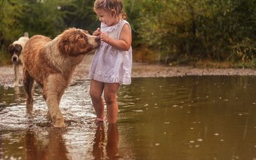 nature, dress, animals, girl, rain, child, fright, puddle, dogs, baby