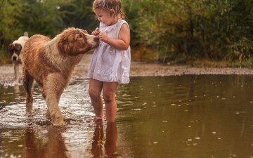 природа, платье, животные, девочка, дождь, ребенок, испуг, лужа, собаки, малышка