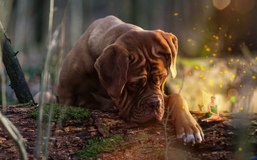природа, собака, фея, животное, пес, бревно, коллаж, бордоский дог, дог