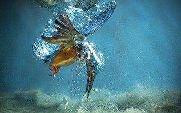 птица, клюв, под водой, перья, рыбка, зимородок