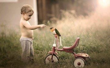 птица, ребенок, мальчик, малыш, велосипед, попугай