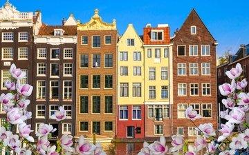 цветы, река, цветение, весна, здания, нидерланды, амстердам