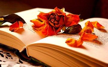 цветок, роза, лепестки, книга, страницы