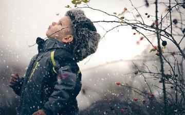 снег, зима, ветки, шиповник, ягоды, ребенок, мальчик