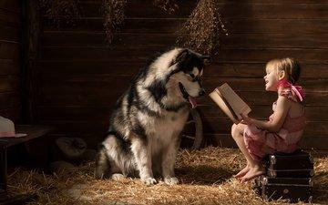 smile, dog, children, girl, straw, book, friends, suitcase, alaskan malamute, child.