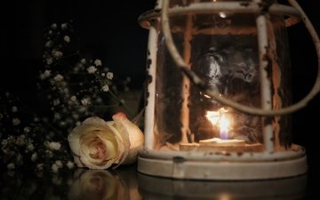 style, flower, rose, fire, lamp, bud, lantern, candle, gypsophila