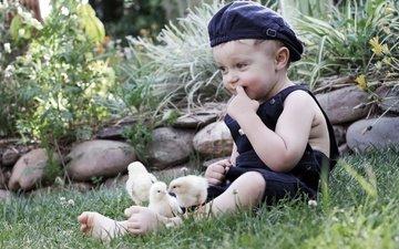 трава, природа, камни, ребенок, мальчик, кепка, птенцы, цыплята