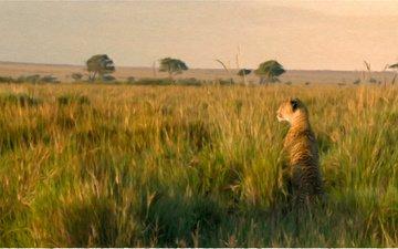 grass, nature, animal, leo, lioness, wild cat
