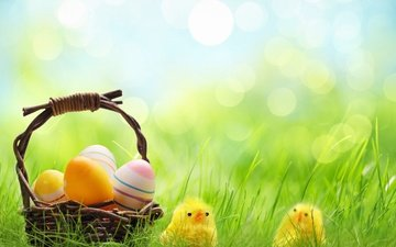 grass, spring, basket, easter, eggs, bokeh, chickens